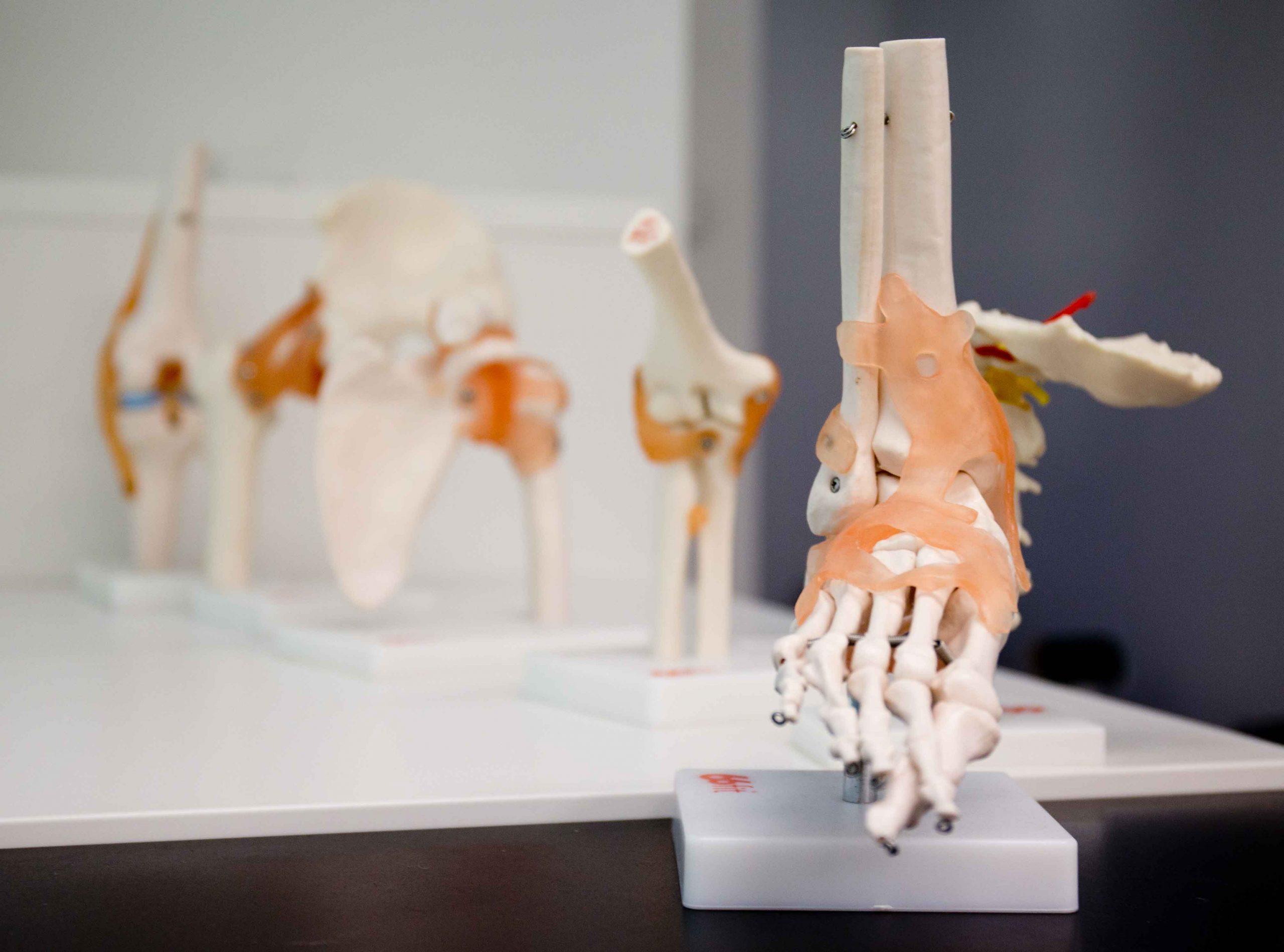 Remedial Massage - Joondalup Sports Remedial Massage Treatment Skeleton